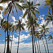 Big Island Hawaii Palm Stretch Art Print