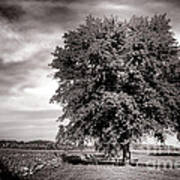 Big Old Tree Art Print by Olivier Le Queinec