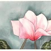 Big Pink Cyclamen Art Print