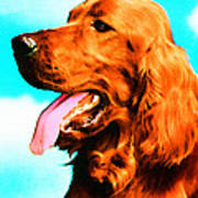 Big Red - Irish Setter Dog Art By Sharon Cummings Art Print by Sharon Cummings