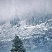 Big Tree At The Mountains Art Print
