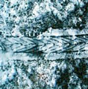 Bikesnowprint 2009 Art Print