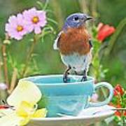 Billy Bluebird Having Tea Art Print