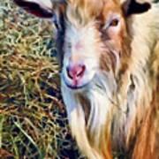 Billy Goat Closeup Art Print