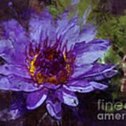 Biltmore Estate Water Lily Garden #2 Art Print