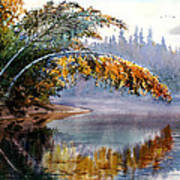 Birch Creek Beauty Art Print by Vladimir Zhikhartsev