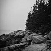 Birch Point Black And White Art Print