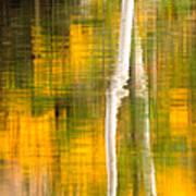 Birch Reflections Art Print
