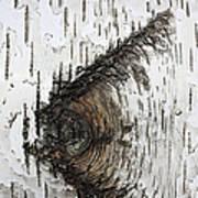 Birch Textures 30 Art Print