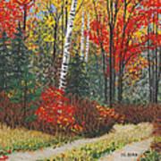 Birch Trail Art Print