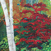 Birch Trees In Red Art Print