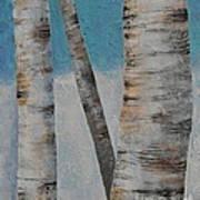Birch Trees Art Print