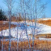 Birches And Cattails Art Print