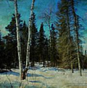 Birches  Art Print by Dianne  Lacourciere