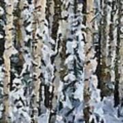 Birches In The Winter Art Print