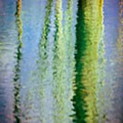 Birches Reflections II Art Print