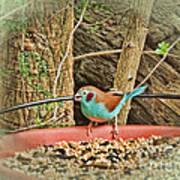Bird And Feeder Art Print