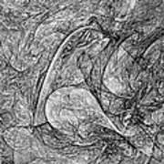 Bird B-w 625 - Marucii Art Print