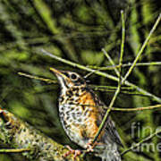 Bird - Baby Robin Art Print by Paul Ward