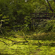 Bird By Bridge In Forest Merged Image Art Print