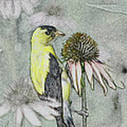 Bird Eating Seeds For One Digital Art Art Print