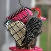 Bird Feeder Wp 06 Art Print