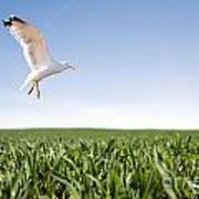 Bird Flying Over Green Grass Art Print
