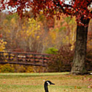 Bird In Park Art Print
