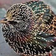 Bird In Seattle Art Print