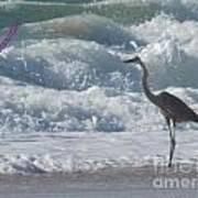 Bird In Surf Art Print