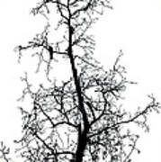 Bird In The Branches Art Print