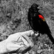 Bird In The Hand.seattle.bw Art Print
