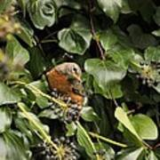 Bird In The Ivy Art Print