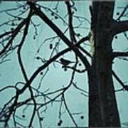 Bird In Tree Art Print