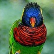 Bird In Your Face  Art Print