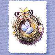 Bird Nest With Daisies Eggs And Butterfly Art Print