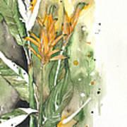 Bird Of Paradise 08 Elena Yakubovich  Art Print