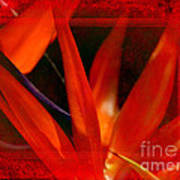 Bird Of Paradise Flower 5 Art Print