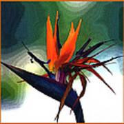 Bird Of Paradise Flower Fragrance Art Print