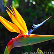 Bird Of Paradise Plant Art Print