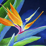 Bird Of Paradise Art Print by Stephen Anderson