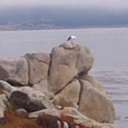 Bird On A Rock Art Print