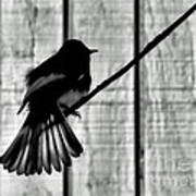 Bird On A Wire I Art Print