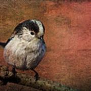 Bird On The Beam Art Print