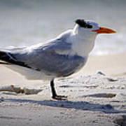Bird On The Shoreline Art Print