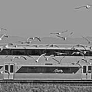 Bird Train Alviso 2 Art Print