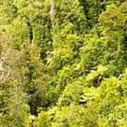 Bird View Of Lush Green Sub-tropical Nz Rainforest Art Print