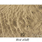 Bird Walk Art Print by Artist and Photographer Laura Wrede