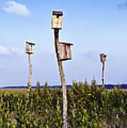 Birdhouses In Salt Marsh. Art Print