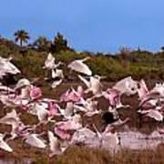 Birds Call To Flight Art Print